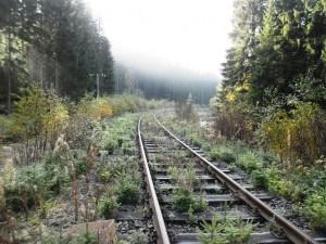 24.10.2015 - Strecke  zwischen Schönheide Süd und Morgenröthe Rautenkranz am km 77,9 mit dichten Fichtenbewuchs